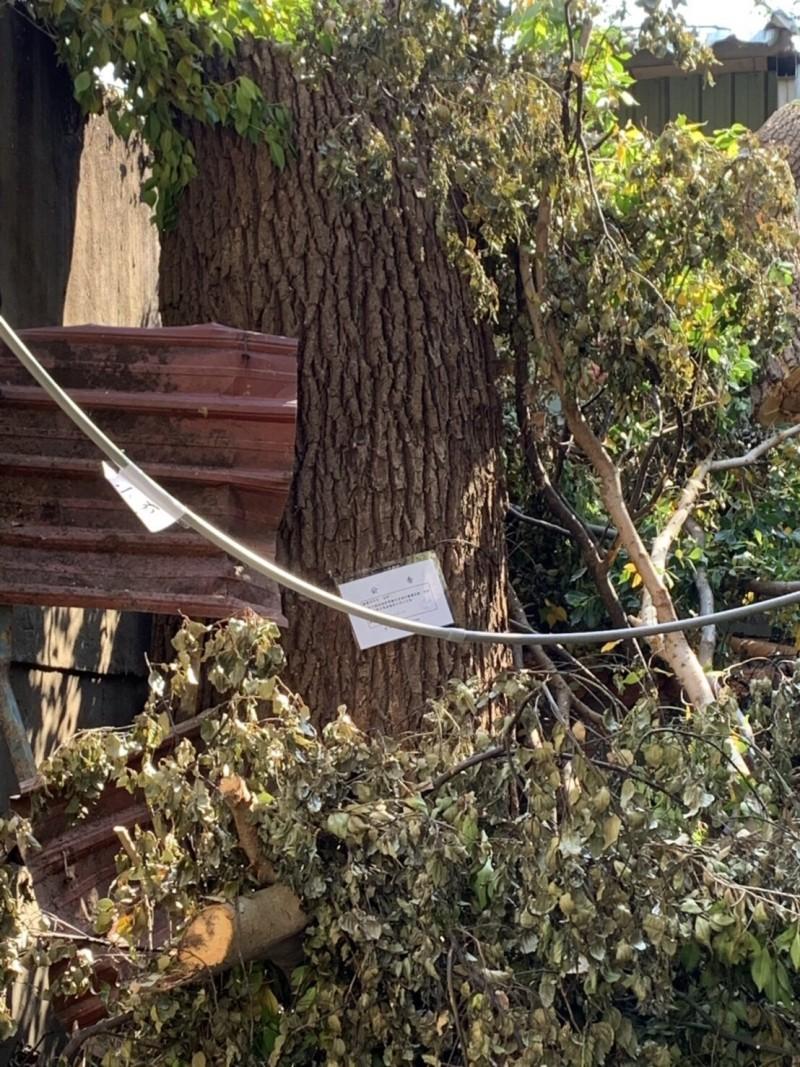 地主無視景觀處放在樹身上的公告,擅自砍樹。(新北市政府提供)