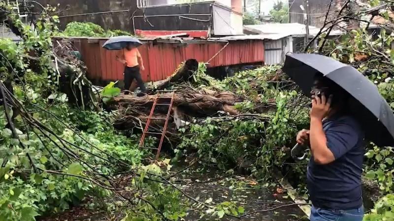 基隆東光路300年老榕樹倒塌,阻斷出路。(記者林欣漢翻攝)