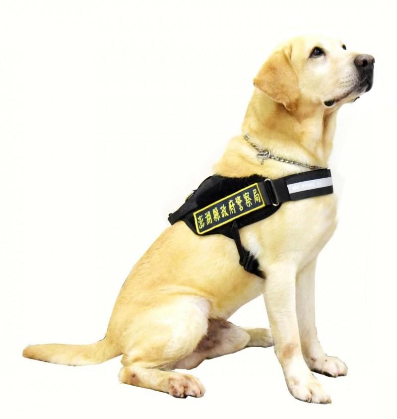 澎湖警犬隊創隊元老歐弟,也是澎湖縣警察局最佳反毒代言人。(澎湖縣警察局提供)