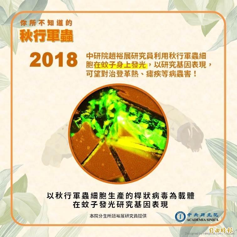 中研院指出,秋行軍蟲對疫苗研究極有幫助。(中研院提供)
