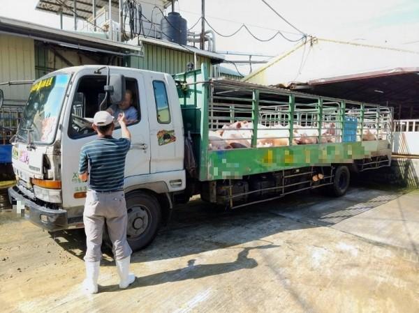 活豬運輸車強制加裝GPS。(記者陳文嬋翻攝)