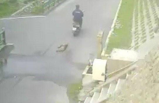 老農騎機車殘忍拖行小狗。(記者張軒哲翻攝)