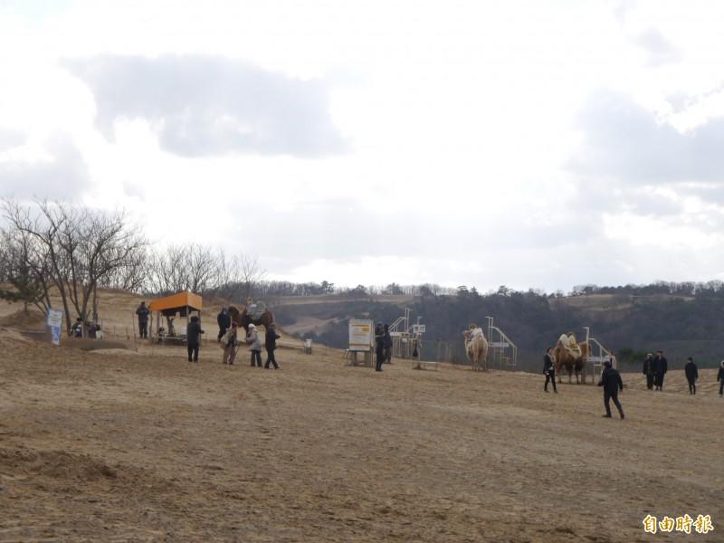 遊客可於鳥取砂丘騎駱駝拍照。(記者張軒哲攝)