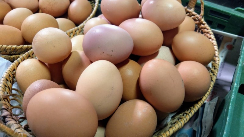 彰化縣是雞蛋生產大縣,供應全台4成5雞蛋量。(圖縣府農業處提供)