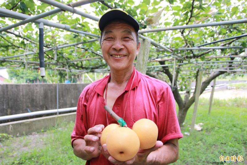 三灣梨農黃梁生栽種水梨18年,屢屢獲得評鑑佳績。(記者鄭名翔攝)