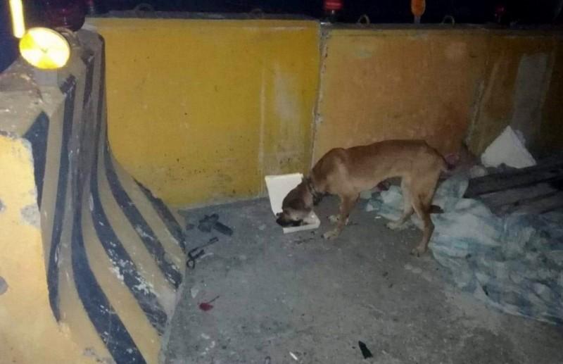 台灣動物緊急救援小組百公里接力搶救鐵絲勒喉狗。 (台灣動物緊急救援小組提供)