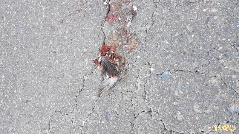 陳建樺看過照片後指出,是紅鳩的屍體。(記者林宜樟攝)