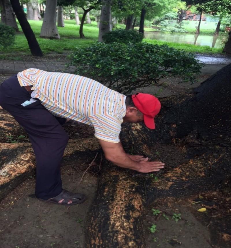防疫人員在南市東區巴克禮公園樹洞積水發現有孑孓,教管理員填土防堵孳生孑孓。(記者王俊忠翻攝)
