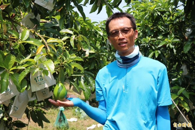 樂咖青農楊富隆因看好酪梨產業,辭去科技業的高薪工作,返鄉種植酪梨3年多,也種出一番心得。(記者萬于甄攝)