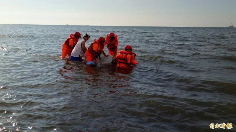 海巡人員全力搶救擱淺的柏氏中喙鯨。(記者陳恩惠翻攝)