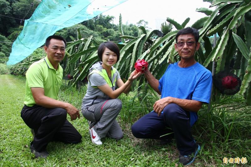忠和村長張順興(左起)、嘉義縣議員林緗亭參觀蔡銘旺的果園。(記者林宜樟攝)
