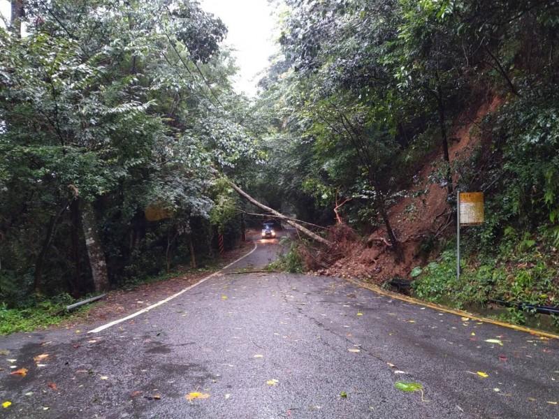 通往大雪山遊樂區雪山路樹木倒塌。(記者張軒哲翻攝)