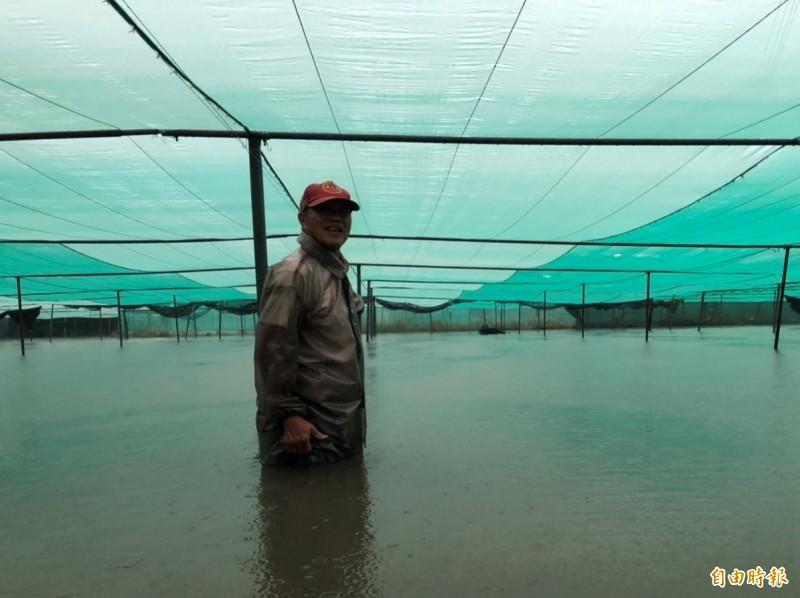 西螺鎮有菜園淹至大腿。(記者林國賢攝)