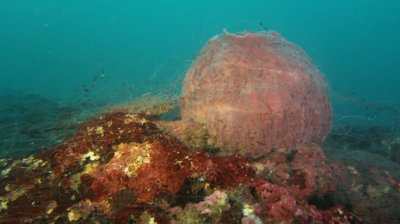 海底覆網對海洋生態的嚴重危害。(圖由新北市政府漁業及漁港事業管理處提供)