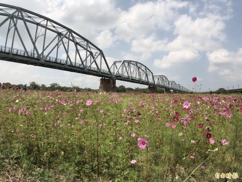 高屏溪舊鐵橋屏東端是今年國慶煙火舉辦地。(記者羅欣貞攝)