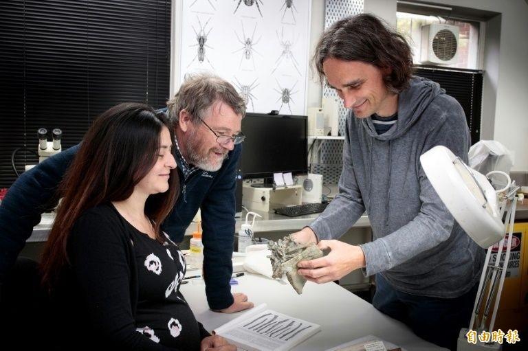 古生物專家檢視新發現的古代巨型企鵝化石。(法新社)