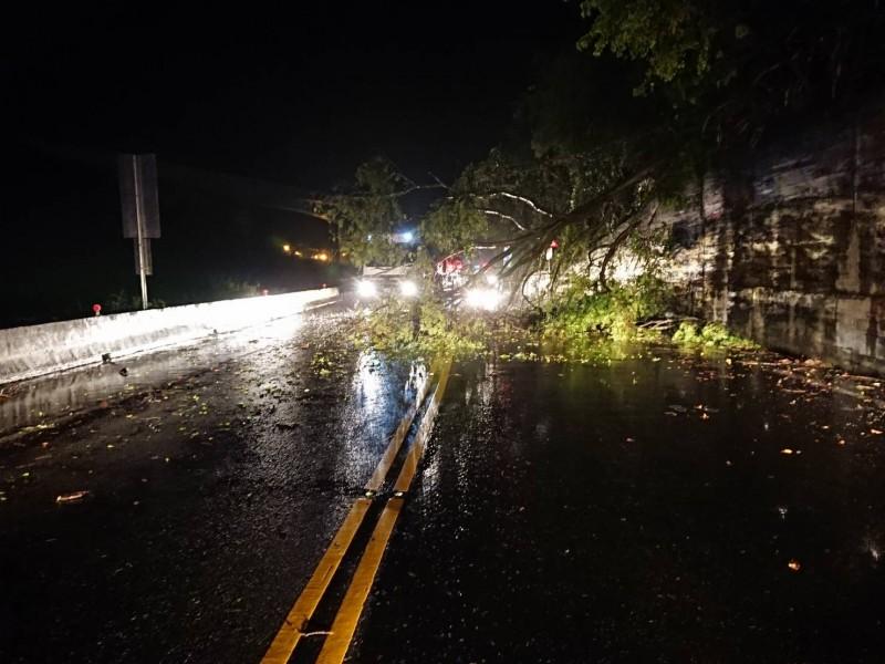 蘇花公路134.3公里處昨晚路樹倒塌,一度阻斷交通。(記者江志雄翻攝)