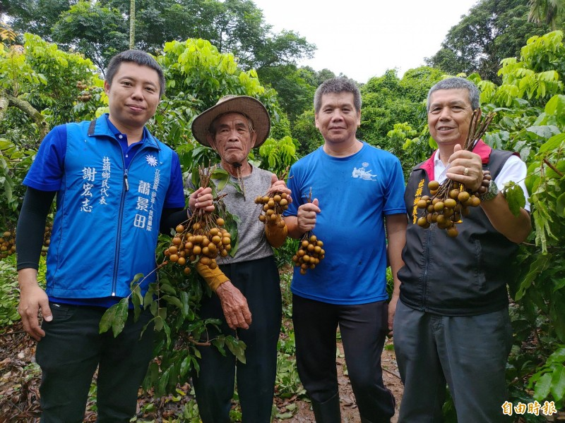 社頭鄉農會總幹事蕭浚二(右1)前往劉家果園訪視,對其矮化管理方式感到佩服。(記者陳冠備攝)