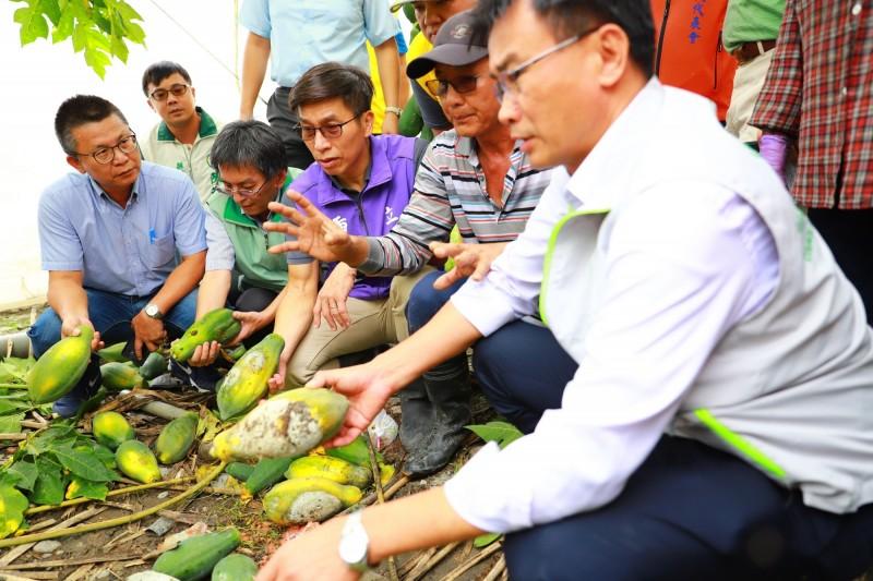 農委會主委陳吉仲到屏東勘查木瓜等農作物受損情況。(記者葉永騫翻攝)