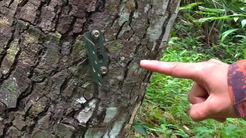 林務局、黑熊保育協會架設的相機被偷走,只留下釘在樹上的相機基座。(玉里分局提供)