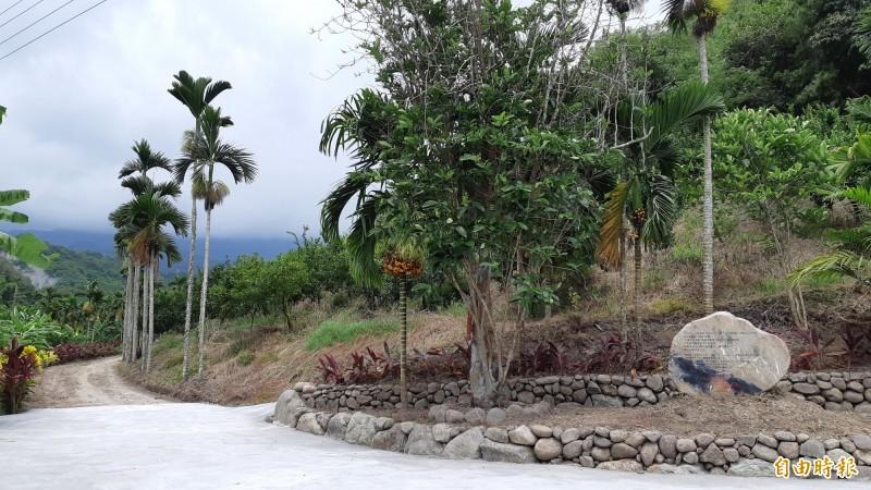 位於東河北源村的這株咖啡樹是日本企業KEY COFFEE創始人所種,今立百年碑紀念。(記者黃明堂攝)