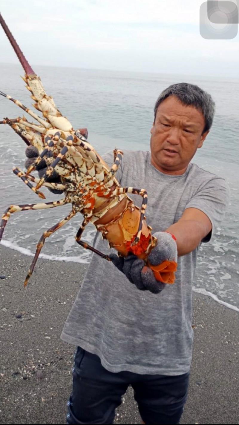 池祥鈺手拿5斤重的大龍蝦,放回大海。(記者黃明堂翻攝)