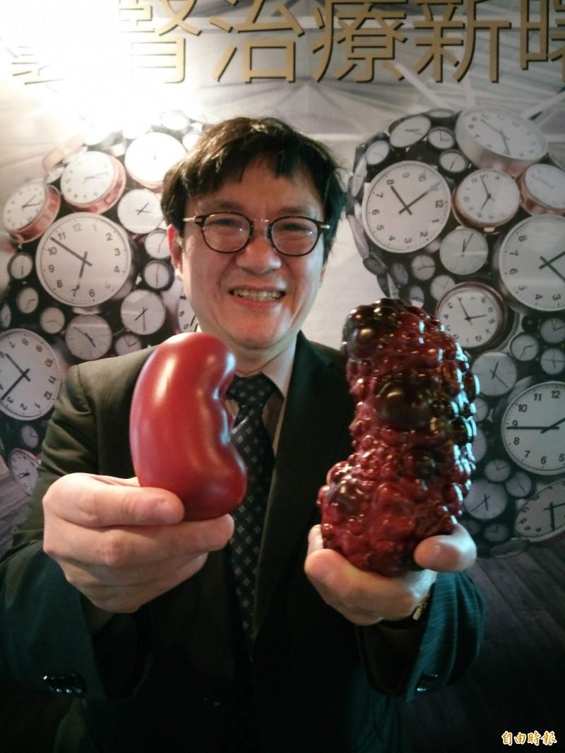 多囊腎病患的腎臟會長滿囊泡,並腫脹到一般腎臟的兩倍。右為多囊腎腎臟,左為正常腎臟模型。(記者吳亮儀攝)