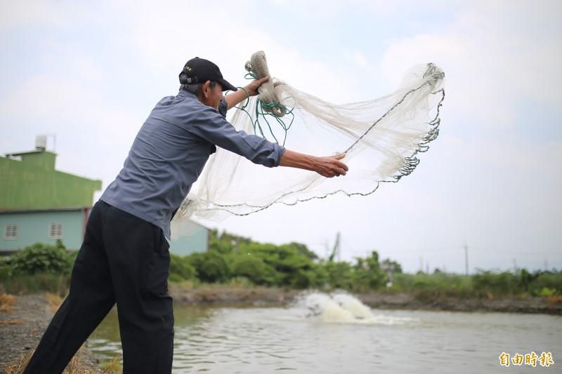 白鹿颱風來勢洶洶,潮州鎮公所首辦的「潮洲賽神蝦」順延至9月1日舉行。(記者邱芷柔攝)