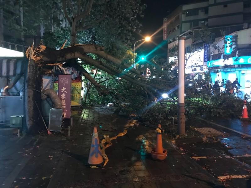 台南市南區大同路有路樹遭強風襲倒、壓到停在路旁的車子,幸無人員傷亡。(圖:讀者王祐邦提供)
