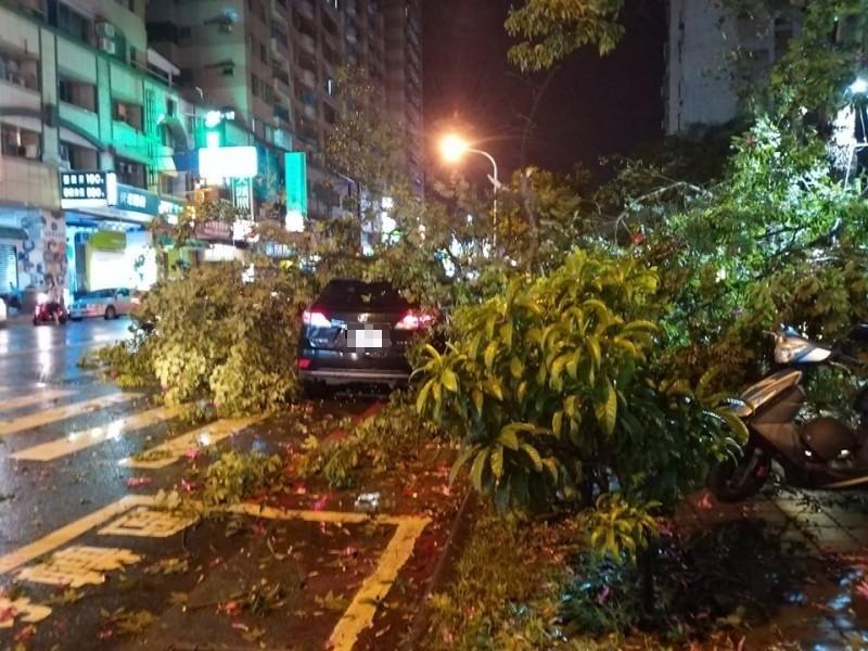 台南市南區大同路有路樹遭強風襲倒、壓到停在路旁的車子,幸無人員傷亡。(記者王俊忠翻攝)