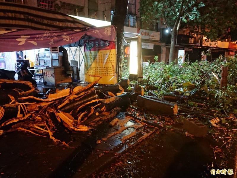 白鹿颱風「踢」倒行道樹,工務單位先截斷待清運。(記者洪瑞琴攝)