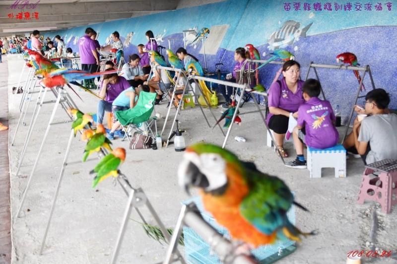 來自全國各地的鳥友昨日聚集苗栗外埔漁港,每隻鸚鵡身價昂貴,最貴高達80萬元。(記者鄭名翔翻攝)