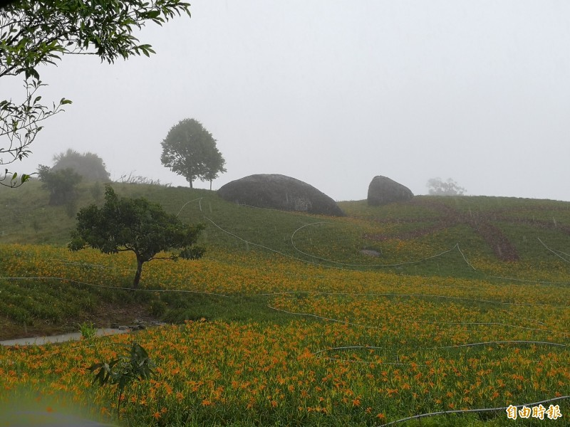赤科山知名景點「3顆巨石」今日花況,和颱風前相比幾乎無差別。(記者花孟璟攝)
