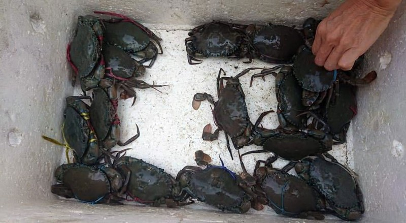 一整箱的螃蟹,被「放生」進鹽水溪內。(記者蔡文居翻攝)
