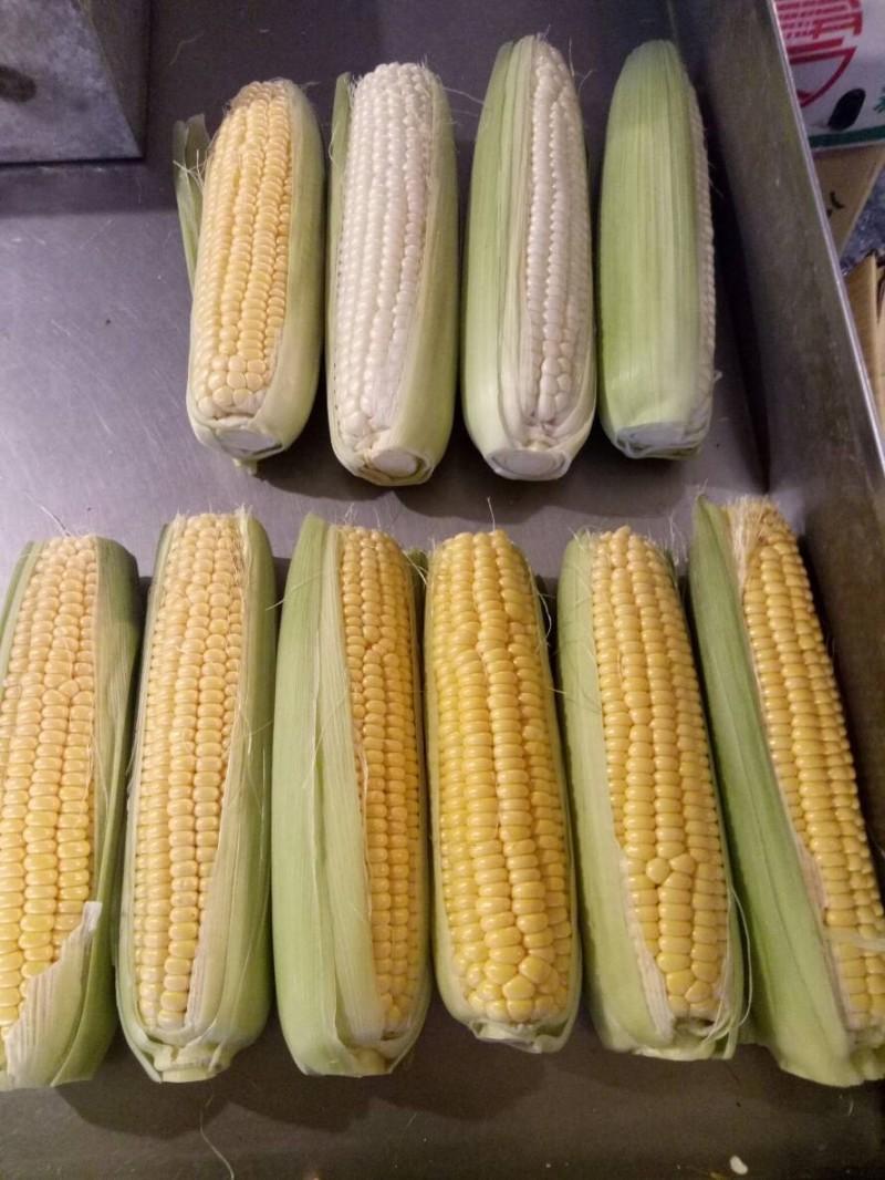 中秋烤肉食材玉米因秋行軍蟲侵台供量減少,較去年同期漲幅11.8%。(主計處提供)