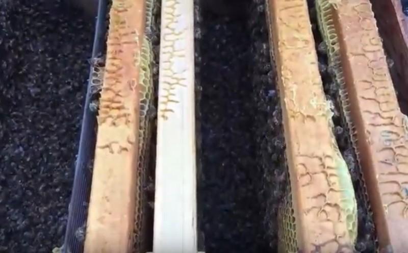 嘉義縣梅山鄉一處養蜂場有大量蜜蜂中毒死亡。(記者林宜樟翻攝)