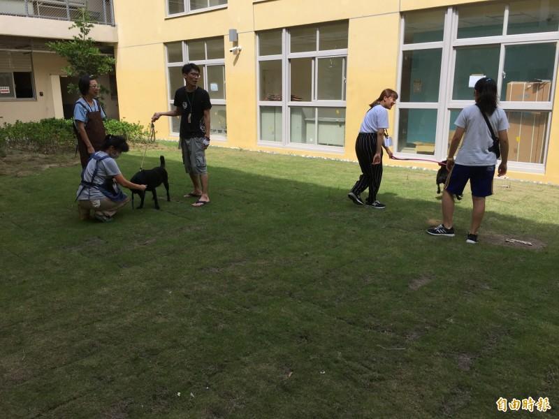 園區也提供志工培訓空間和訓練,增加犬貓與人親近的訓練,藉以提高認養率。(記者洪美秀攝)