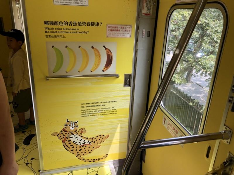 台鐵集集支線「國立集集美術館」石虎香蕉列車,車廂內的石虎圖案已完成重貼,圖為台版石虎。(日管處提供)