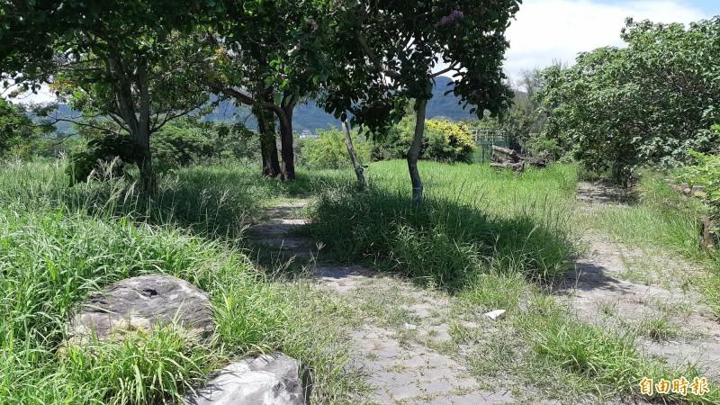 台東水利公園鋪石步道也長雜草。(記者黃明堂攝)
