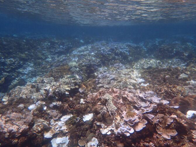 2016年墾丁核三場出水口珊瑚白化(研究團隊提供,魏杰攝影)