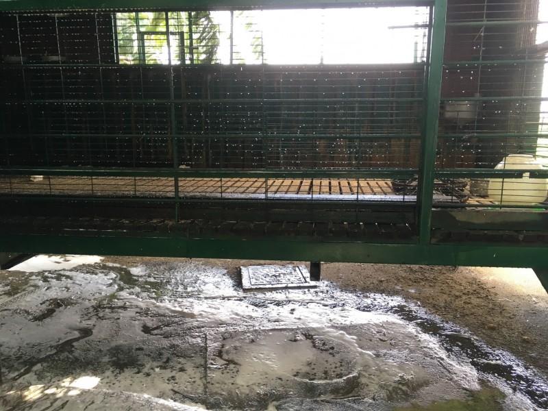 南彰化地區今天傳出1起家庭式圈養家禽染上禽流感疫情,該場同時寫下4個全縣今年第1,首宗民眾居家飼養染病、鵝隻、火雞、紅面番鴨各都是今年第1起染上H5N2亞型高病原性禽流感。(圖動防所提供)