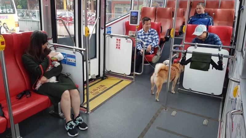 新北市推出7路線、各3班次的假日寵物公車,民眾可以牽繩的方式帶毛寶貝搭公車到公園遊憩。(新北市政府提供)