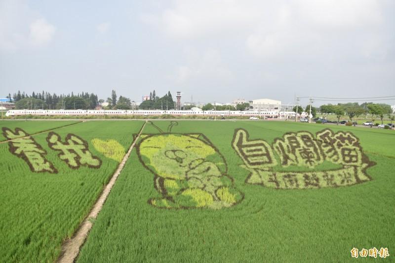 斗南鎮農會在石龜火車站前打造2公頃白爛貓彩繪田,今日起進入最佳觀賞期,一早吸引許多人前往拍照打卡。(記者黃淑莉攝)