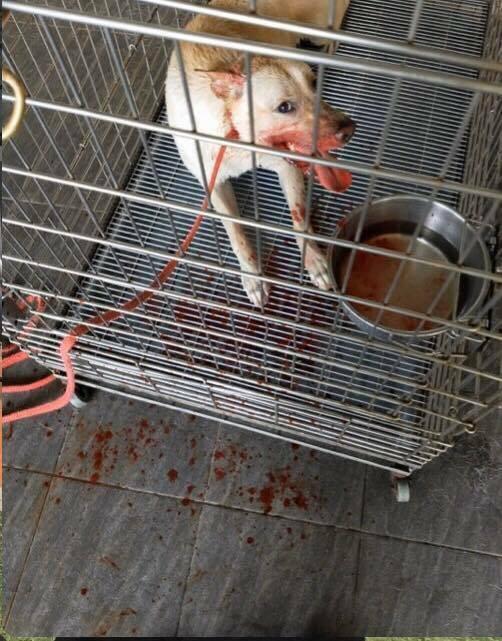 爆料者揭露,犬籠內飼料碗有大量蟑螂,狗兒口腔滿是血,皮膚潰爛等。(記者許倬勛翻攝)