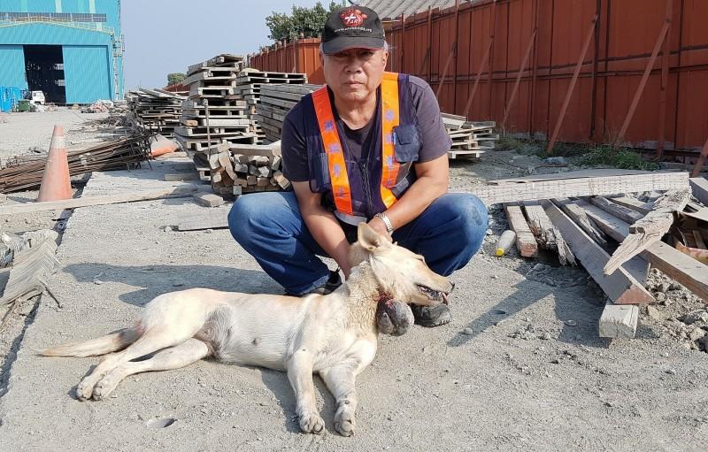 台灣動物緊急救援小組營救流浪犬。(台灣動物緊急救援小組提供)
