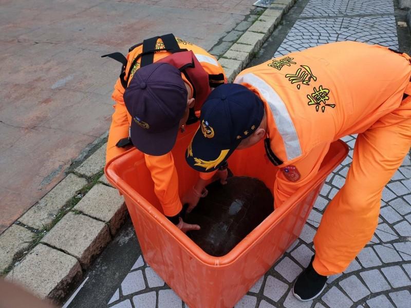 欖蠵龜被放進大塑膠桶內暫時安置,等候海洋大學研究人員前來帶回詳細檢查。(海巡署提供)