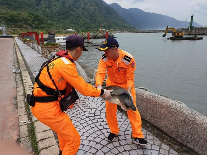 海巡人員把欖蠵龜搬運準備放置塑膠桶。(海巡署提供)