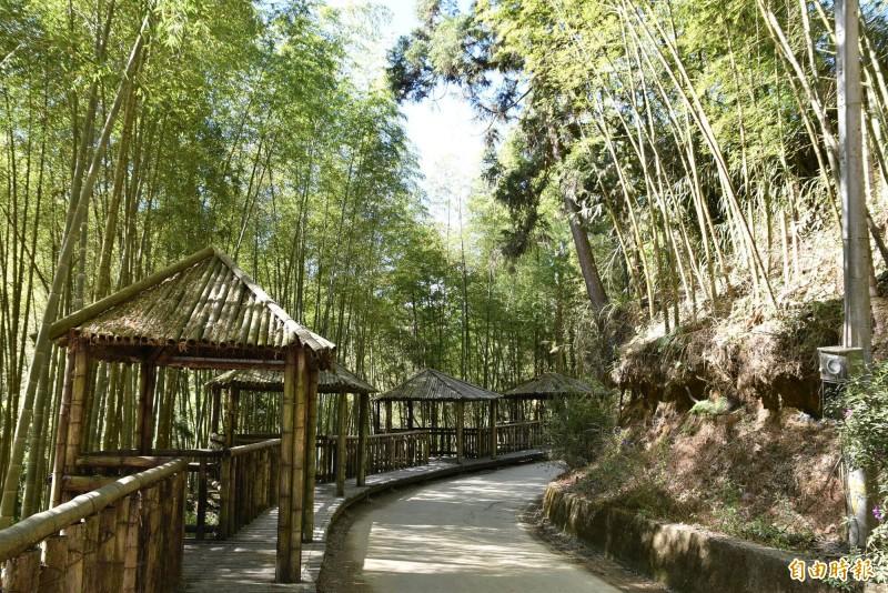 草嶺石壁的五元二角孟宗竹林祕境。(記者黃淑莉攝)