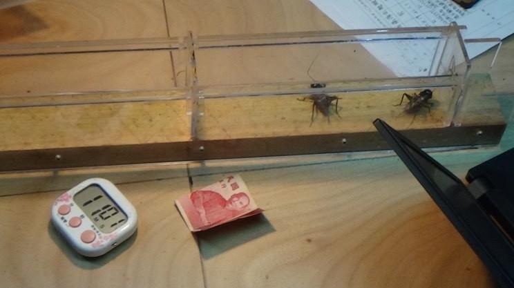 台南警方在西港區查獲一處鬥蟋蟀下注賭場。(記者王俊忠翻攝)