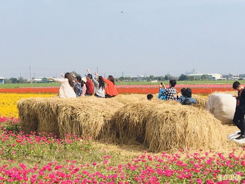 太保花海節稻草堆人氣很旺。(記者蔡宗勳攝)